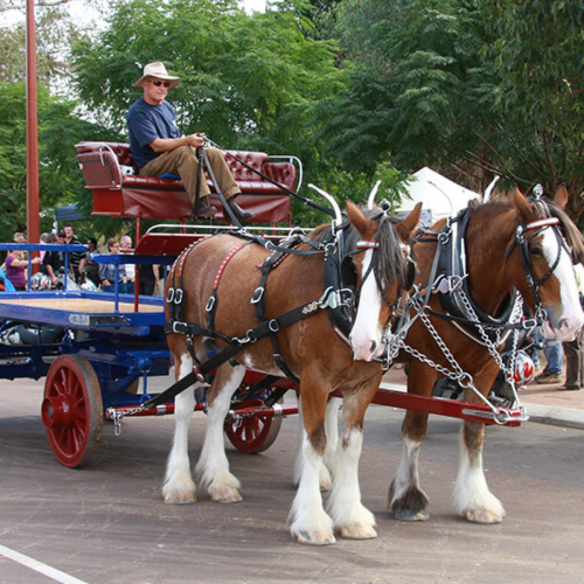 Clydesdale cart rides