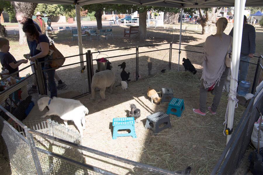 Children's Animal Farm