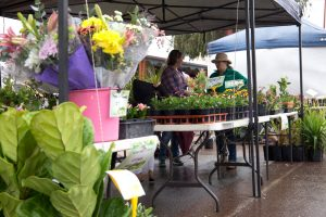 Buy a plant or three from the nursery's stall